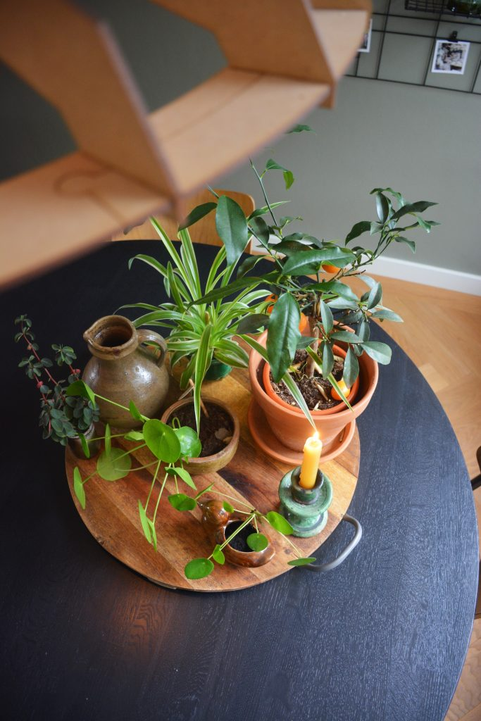 Styling plateau planten